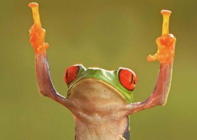 frog fu