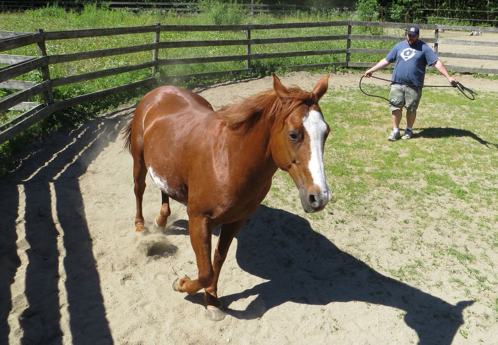 hippotherapy Once a Soldier